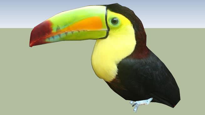 巨嘴鸟SU模型【ID:739382432】