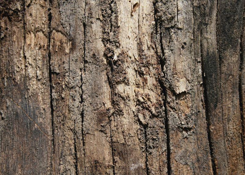 木纹木材-树皮高清贴图【ID:236486393】