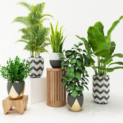现代绿植盆景组合3D模型【ID:328437827】