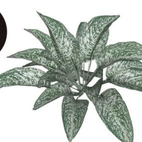 银叶大黄 画 植物 钞票 饰品 其他 【ID:739456954】