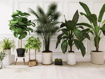 现代绿植盆栽植物3D模型【ID:331401821】