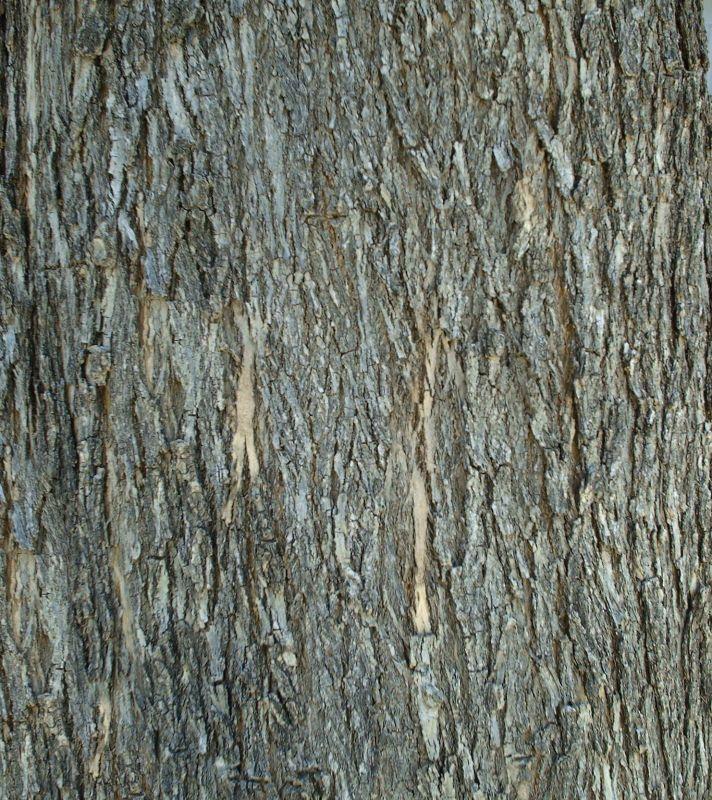 木纹木材-树皮高清贴图【ID:236567393】