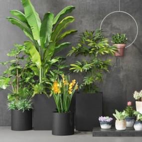 现代植物盆栽组合3D模型【ID:328442804】