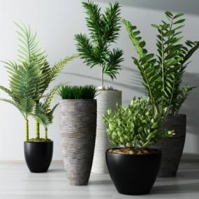 现代绿植盆栽组合3D模型【ID:328437822】