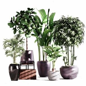 现代植物盆栽3D模型【ID:236237803】