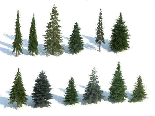 松树3D模型【ID:320019639】