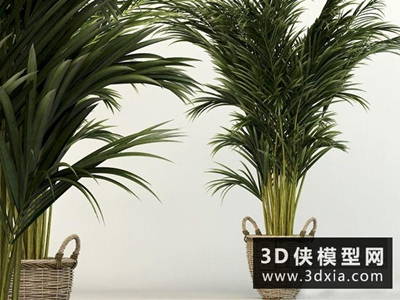 現代植物國外3D模型【ID:229457753】