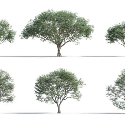 现代树组合3D模型【ID:327789677】