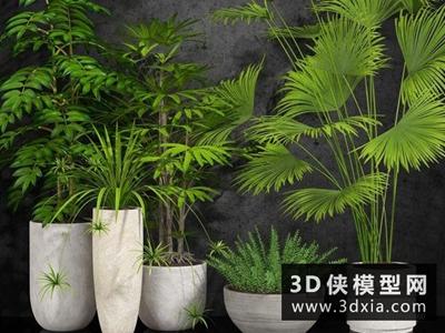 現代植物組合國外3D模型【ID:229381730】