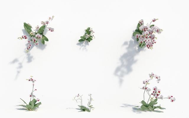 现代花3D模型【ID:920618621】