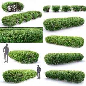 现代灌木丛3D模型【ID:528452423】