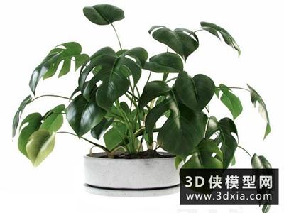 現代植物國外3D模型【ID:229383571】