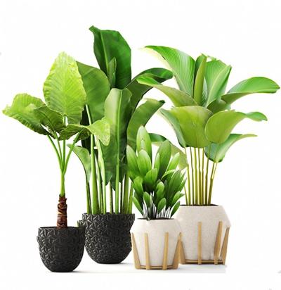 现代盆栽3D模型【ID:124893994】
