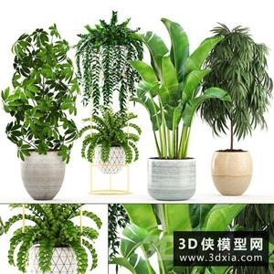 室內盆栽植物國外3D模型【ID:229331753】