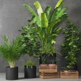 现代植物盆栽组合3D模型【ID:328442800】