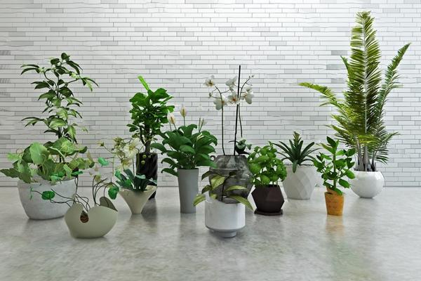 现代盆栽3D模型【ID:920614945】