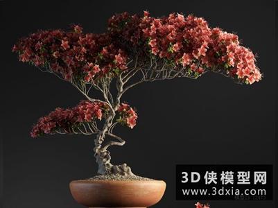 盆栽植物花國外3D模型【ID:229814724】