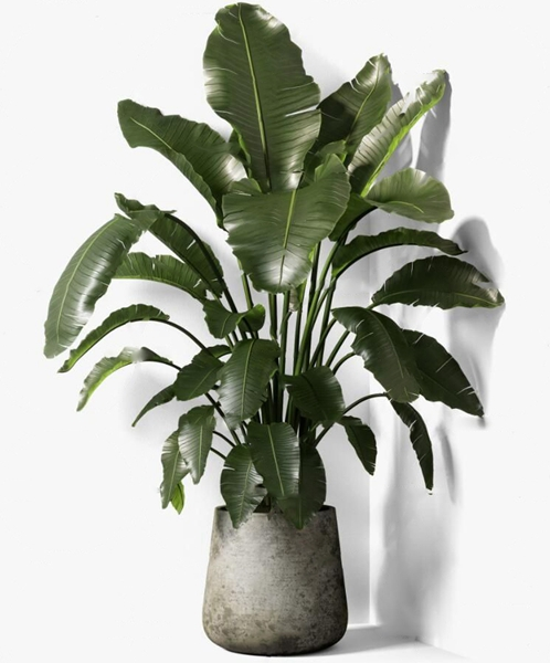 現代綠植盆栽3D模型【ID:249329808】