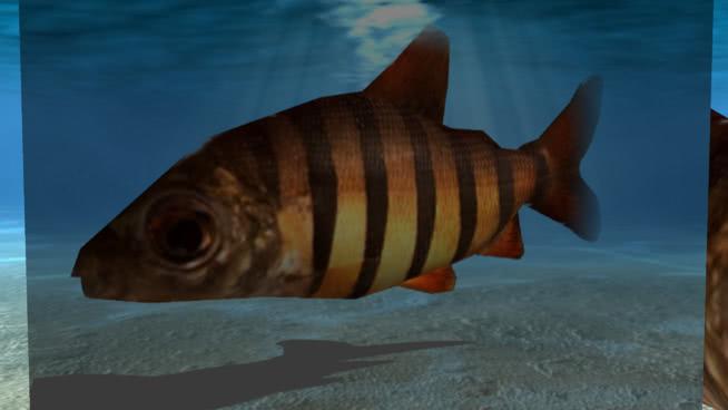 黑鰭小魚SU模型【ID:739569614】