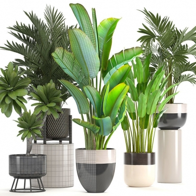 现代植物盆栽组合3D模型【ID:327792856】