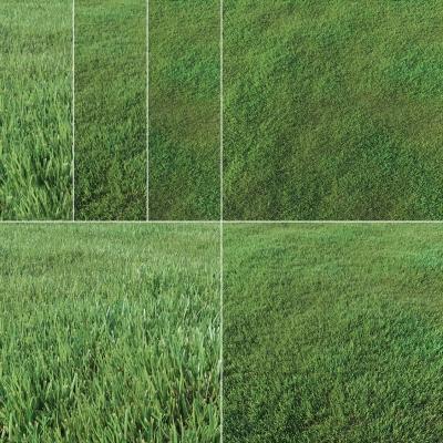 現代草坪草地組合3D模型【ID:527803404】