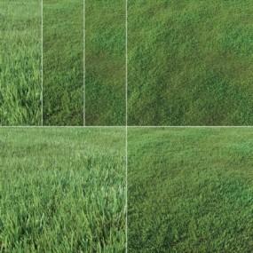 现代草坪草地组合3D模型【ID:527803404】