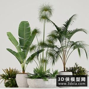 現代植物模型組合國外3D模型【ID:229460712】