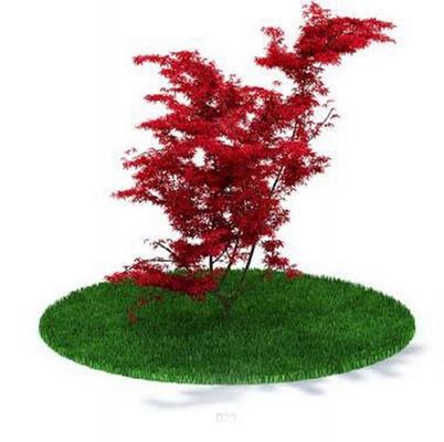 红色景观树3D模型【ID:315076907】