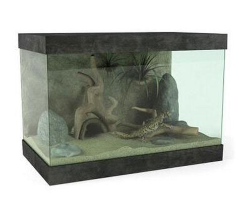 棕色蜥蜴3D模型【ID:315078029】