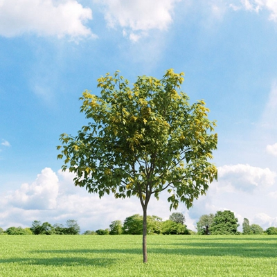 绿色景观树3D模型【ID:315463958】