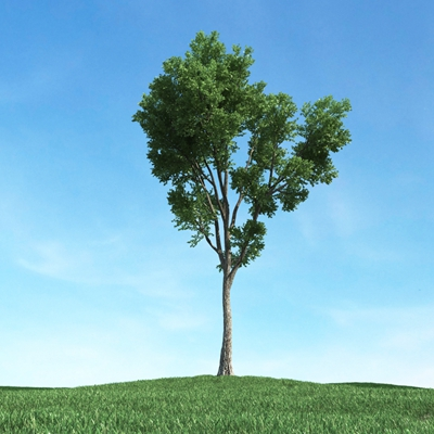 绿色景观树3D模型【ID:315470907】
