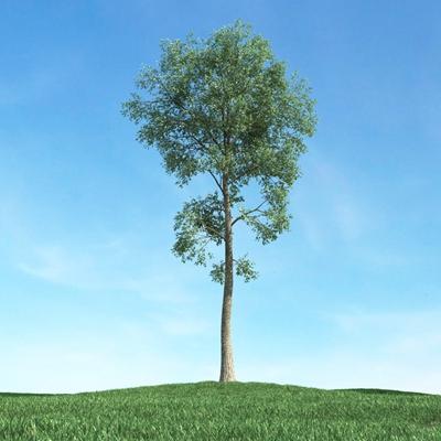 绿色景观树3D模型【ID:315470948】