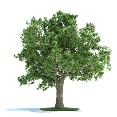 绿色景观树3D模型【ID:316921942】