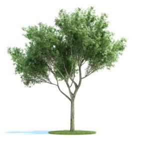 绿色景观树3D模型【ID:316923995】