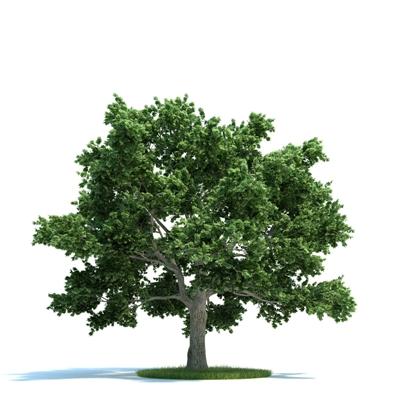 绿色景观树3D模型【ID:316924907】