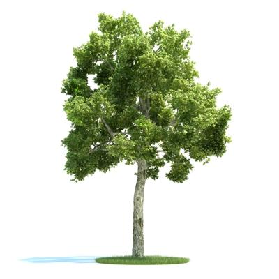 绿色景观树3D模型【ID:316924977】