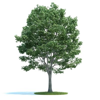 绿色景观树3D模型【ID:316925902】