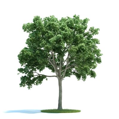 绿色景观树3D模型【ID:316925910】