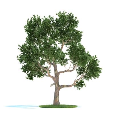 绿色景观树3D模型【ID:316929958】
