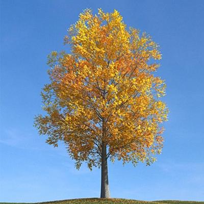 黄色树3D模型【ID:316994617】