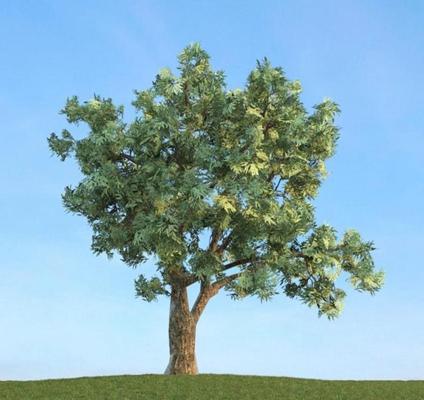 景观树83D模型【ID:317064923】