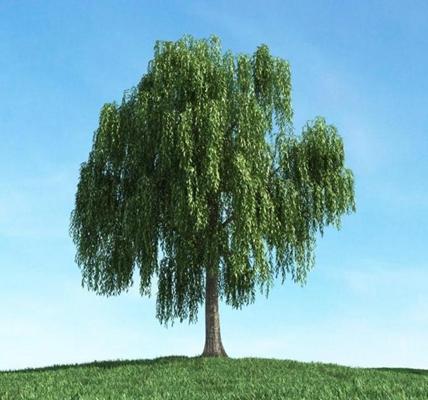 景观树293D模型【ID:317065932】