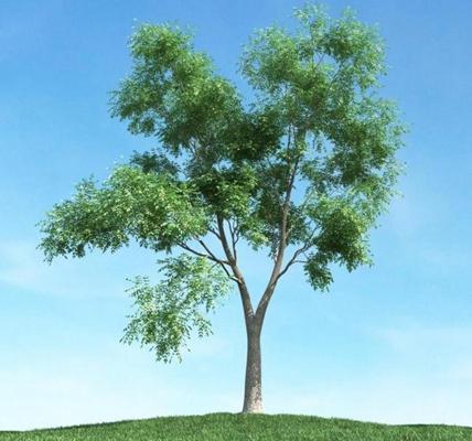 景观树773D模型【ID:317067913】
