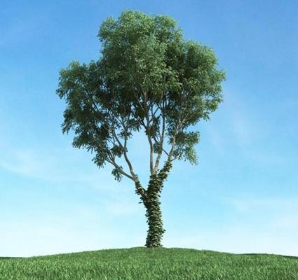 景观树1373D模型【ID:317070900】