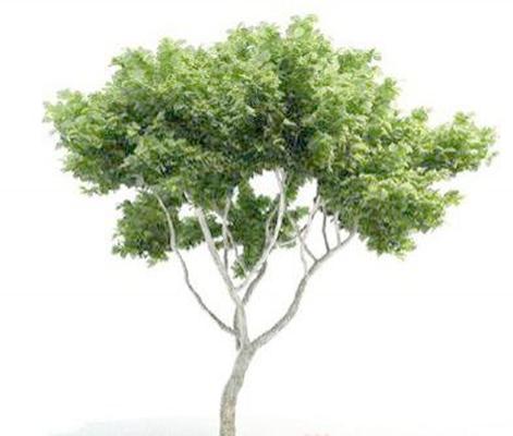 景观树1793D模型【ID:317073943】