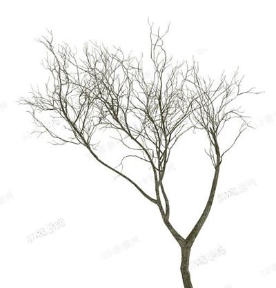 树13D模型【ID:317253688】