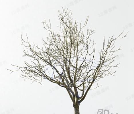 树73D模型【ID:317310527】