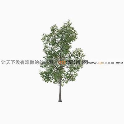 树103D模型【ID:317310539】