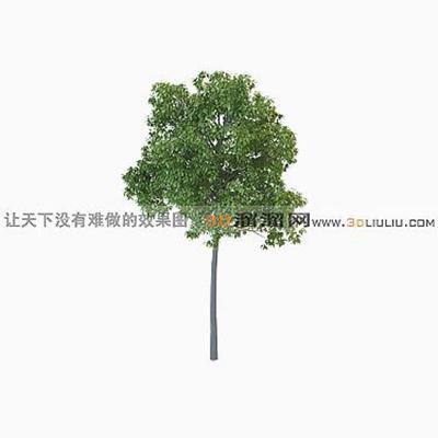 树153D模型【ID:317310572】