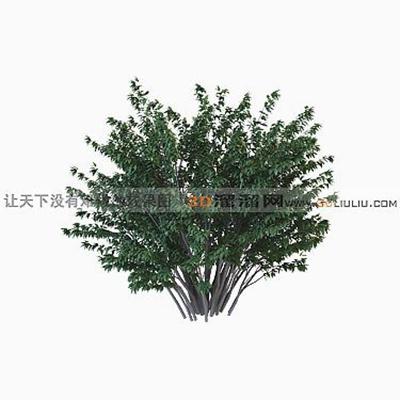 树193D模型【ID:317310589】